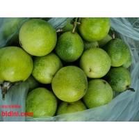 紫香一号百香果苗果树四季挂果批发
